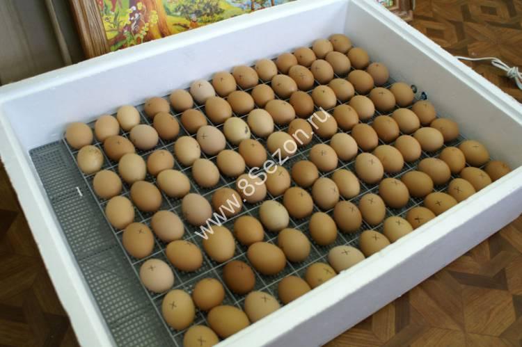 Как сделать решетку для яиц